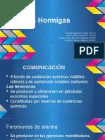 Hormigas.pptx