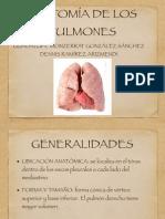 Anatomia de Los Pulmones 2