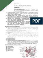 Ramas de La Arteria Maxilar Interna