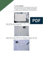 Aprende a Dibujar Parte 5
