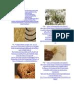Anexos de Fibras Organicas