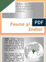 Fauna şi flora Indiei.pptx