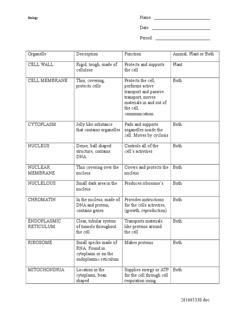 worksheet Cell Organelles Worksheet Answer Key cell organelles worksheet