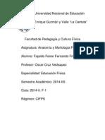 Trabajo de Anatomia y Morfologia Funcional.pdf