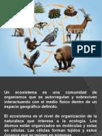 El Ecosistema...