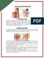 aparatogenitourinario-121201142339-phpapp02
