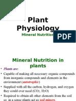 Mineral Nutrition Mycorrhiza