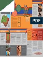 Fundamentos Para Um Plano Indígena de En