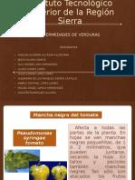 Alejandra Expo Verduras