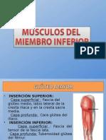 MUSCULOS DE LOS MIEMBROS INFERIORES.ppt