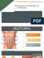 Anatomía de Estomago