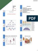 MEDULA OSEA FIRME.pdf