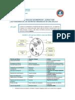 ABP 2-Organelos Resuelta