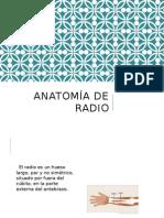 Anatomía de Extremidades I