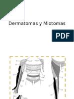 Dermatomas y Miotomas