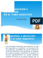 Digestion y Absorcion Tubo Digestivo