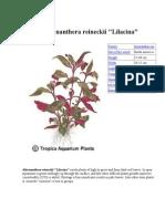 Atlas Plante