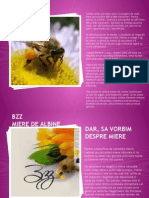 bzz_presentation.pptx