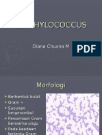 STAPHYLOCOCCUS.ppt