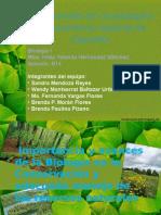 Wendy Conservacion y Adecuado Manejo de Los Recursos Naturales77
