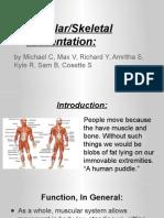 muscular-skeletal model presentation