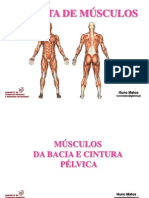 Musculos Bacia