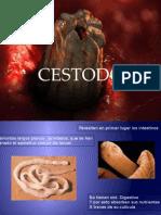 Cestodos Fnl