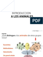 6. Introduccion a Los Animales