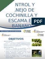 Diapositivas Cochinilla y Escamas