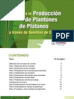 Plantones de Platano