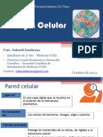 Biología Celular - Organelos