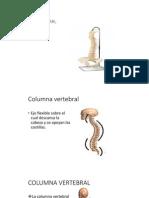 Huesos de La Columna Vertebral