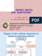 K12- Cell Injury (New)