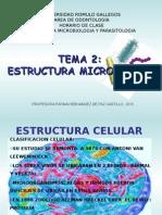Tema Estructura Bacteriana