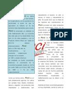 Word Economia y Desarrollo
