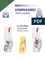 Urogenitalni Sistem