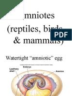 Amniotes 14