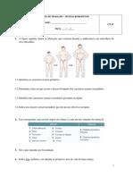 Ficha de Trabalho - Sistema Reprodutor