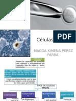 Expo Celulas Madre (1)