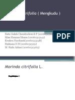 Morinda citrifolia ( Mengkudu )