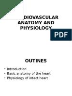 CV Anatomy