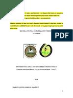 Informe Final Velas REVISADO