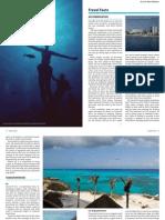 Diving Cozumel Viaje