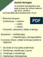 Anatomia Faringeawam