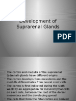Suprarenal Glands Development