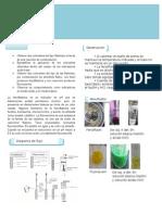 Reporte Fenolftaleina y Fluoresceina.docx