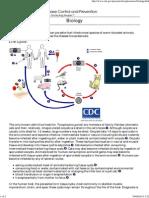 CDC - Toxoplasmosis - Biology