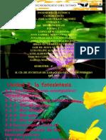 Equipo 3. Fotosintesis_funtes Renovables