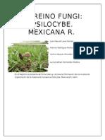 Fungi, Psilocybe Mexicano el hongo mágico