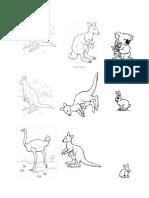 Animale de Australia
